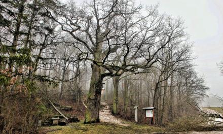 """""""Burghild"""" beschädigt Naturdenkmal"""